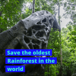 Save the oldest rainforest in the world
